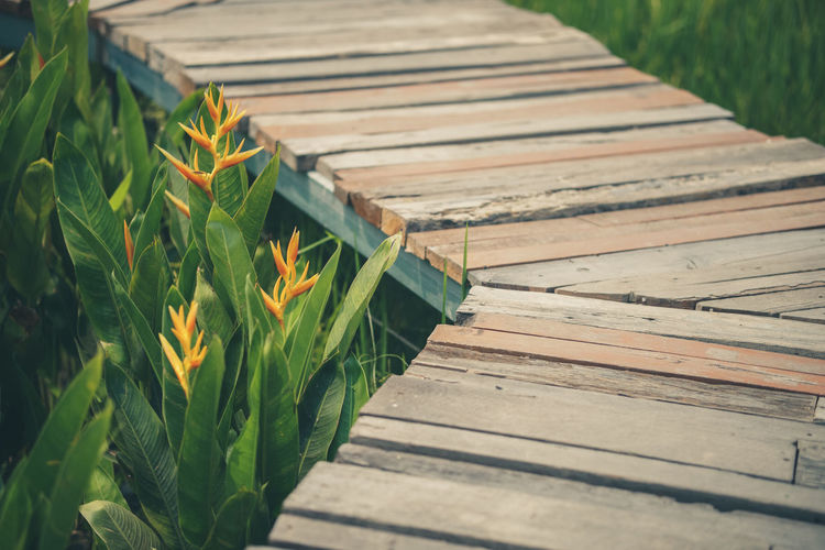 High angle view of boardwalk amidst plants
