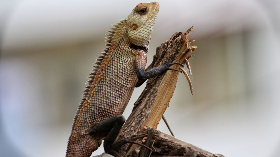 Nature Photography Reptile World Reptilecollection Chameleon Photography Reptileshot