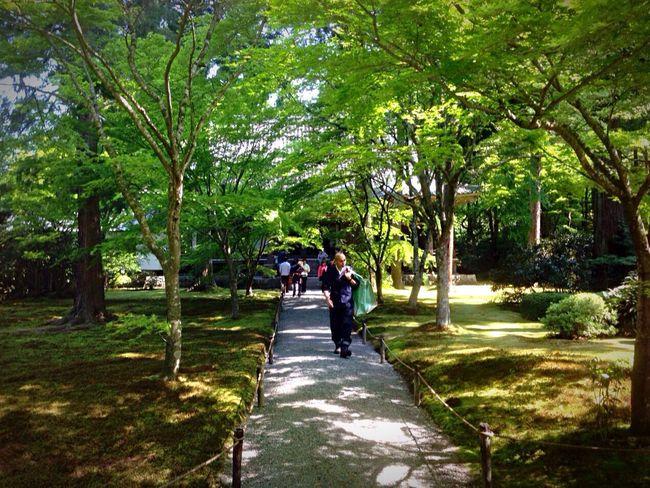 Kyoto Japan Sanzen In Sanzenin Green Today Temple 京都 日本 大原三千院 今日