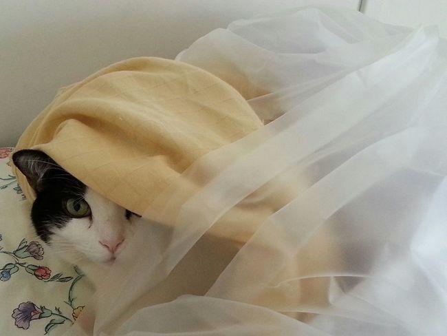 Cat Hiding Softness Textile Sheets Hide Hide And Seek Peeking Peekaboo Blanket Cute Pet