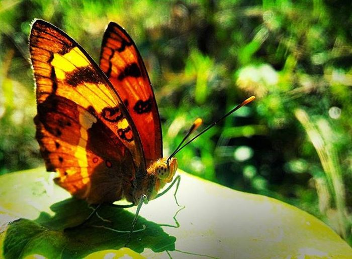 😎📷⚡ ALIENISH..😍✨ Zenfone Zenphone2 Asus Asus LALITHSGALLERY Artist Photography Mobilephotography Vibrant Colours Butterfly Insect Timepass Naturelovers Beauty Patience Skill  Hobby LalithBhonsle Aviary Aviarychallenge