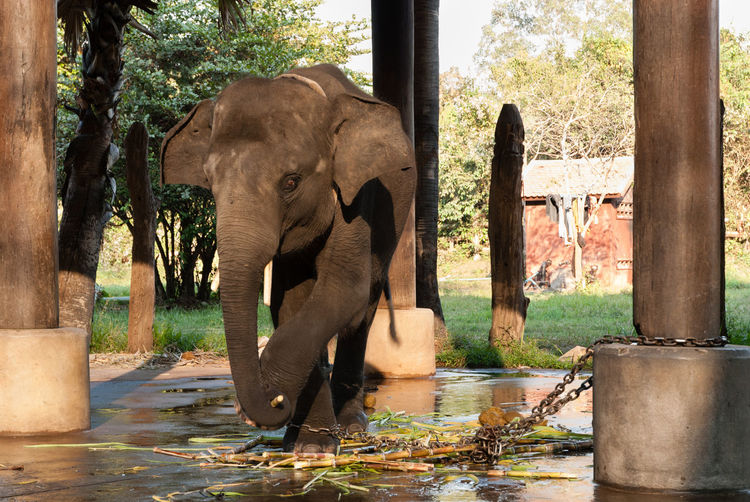 Elephant amidst trees in water