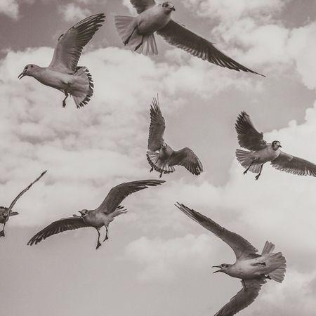 Bisgen Seagulls Blackandwhite Black & White EyeEm Masterclass EyeEm Best Shots Enjoying Life Eye4photography  Bw_collection Sky
