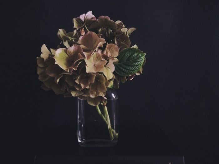 Close-up of flowers in vase against black background