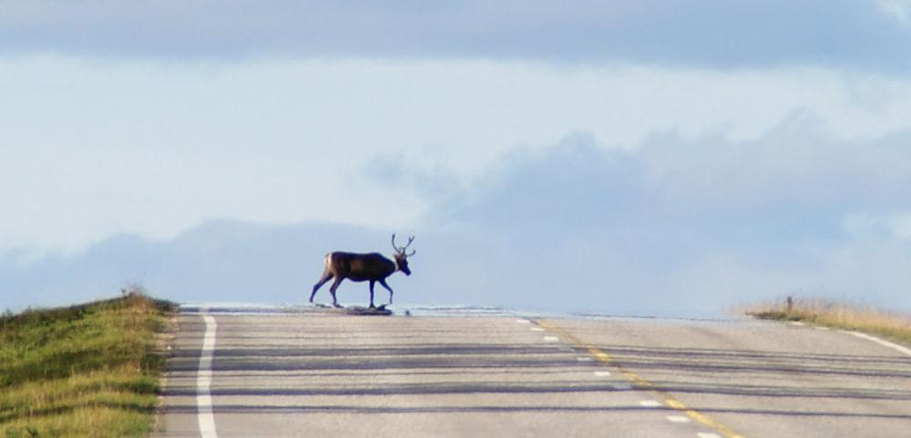 Album Park Nature Nature_collection Finland Reno Reindeer Animals Animal_collection City Urban