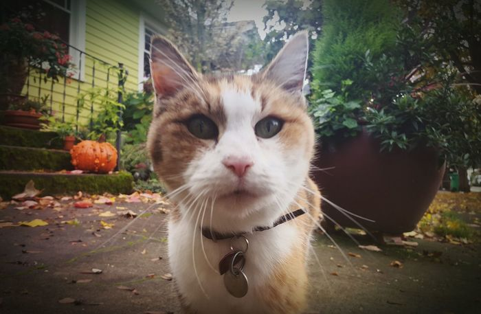 Neighborhood Cat Awesome Cat Animal_collection New Friends Walking Around My Neighborhood Check This Out Cat♡ Cat