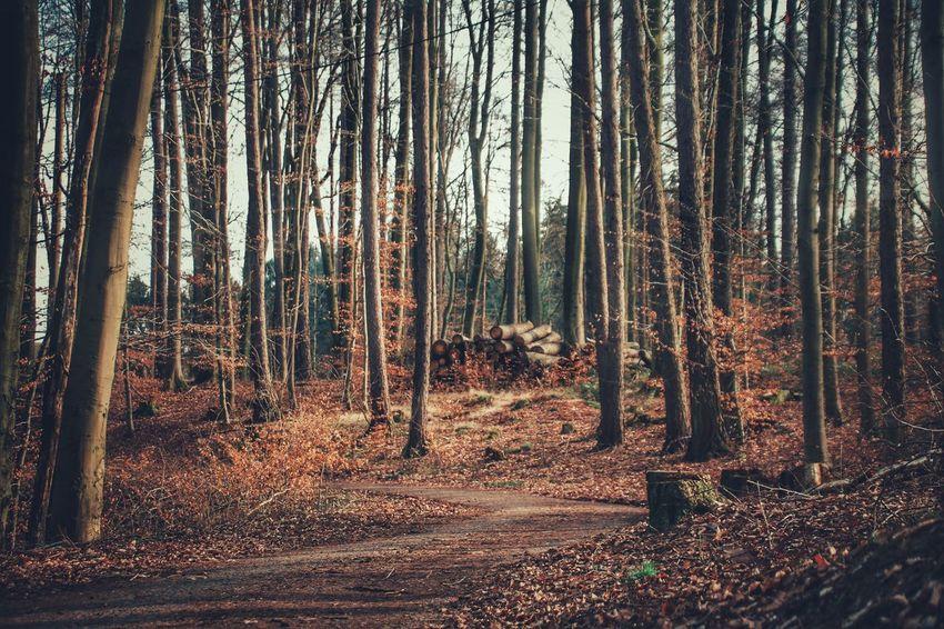 """*Die Wälder schweigen* Die Jahreszeiten wandern durch die Wälder. Man sieht es nicht. Man liest es nur im Blatt. Die Jahreszeiten strolchen durch die Felder. Man zählt die Tage. Und man zählt die Gelder. Man sehnt sich fort aus dem Geschrei der Stadt. Das Dächermeer schlägt ziegelrote Wellen. Die Luft ist dick und wie aus grauem Tuch. Man träumt von Äckern und von Pferdeställen. Man träumt von grünen Teichen und Forellen. Und möchte in die Stille zu Besuch. Man flieht aus den Büros und den Fabriken. Wohin, ist gleich! Die Erde ist ja rund! Dort, wo die Gräser wie Bekannte nicken und wo Spinnen seidne Strümpfe stricken, wird man gesund. Die Seele wird vom Pflastertreten krumm. Mit Bäumen kann man wie mit Brüdern reden und tauscht bei ihnen seine Seele um. Die Wälder schweigen. Doch sie sind nicht stumm. Und wer auch kommen mag, sie trösten jeden. (Erich Kästner) Der """"Hawischer"""" Wald, ein kleines Stückchen Heimat für dich, lieber Patte 🌳😊 A Walk In The Woods Awakening Of Nature Beauty In Nature Eye4nature Eye4photography  Eyeem NatureEyeEm Nature Collection EyeEm Best Shots - Nature EyeEm Gallery EyeEm Nature Lovers EyeEmBestPics Forest Forest Photography Forestwalk Ladyphotographerofthemonth Nature On Your Doorstep Nature Photography Nature_perfection No People Poetry In Pictures Silent Moment Take A Walk Tranquil Scene Tranquility Untamed Heart"""