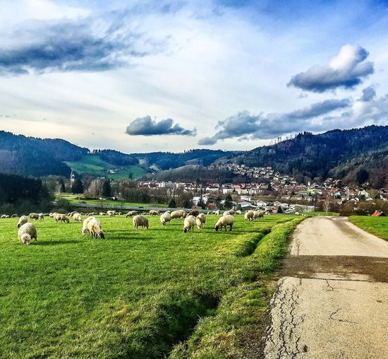 Sheepy hollow 😱🐑 Sheepy Hollow Nature Photography EyeEm Best Shots - Nature Beautiful Nature Nature_collection EyeEm Nature Lover Naturelovers I Love My City Waldkirch