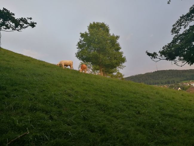 Check This Out Mothernature Nofilter#noedit Mae Natureza Enjoying Life Zurich, Swiss What A Wonderful World Amazing View Cores Da Natureza Schweiz