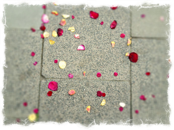 Flower Framed Grey Stone Tiles No People On The Floor Red Rose Petals Vignette Yellow