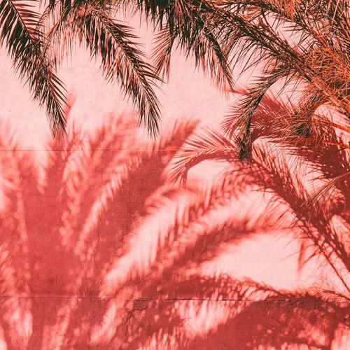 Palm shafows tropical nature art. canary island.