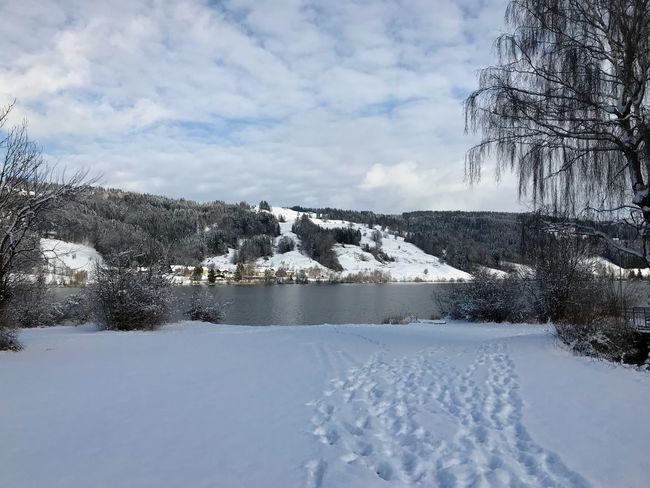 Alpsee Allgäu Alpsee Winterwonderland Winter Snow Snow Winter Cold Temperature Nature Tranquil Scene Sky Tranquility Beauty In Nature Weather Landscape No People Outdoors Day Frozen Cloud - Sky Bare Tree Water Tree Shades Of Winter