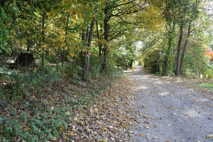 Road in woods.