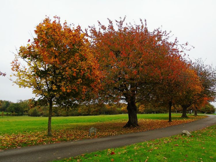 Tree Change Nature No People Autumn Growth Landscape Outdoors Beauty In Nature Autumn Changing Colors Nature On Your Doorstep Nature