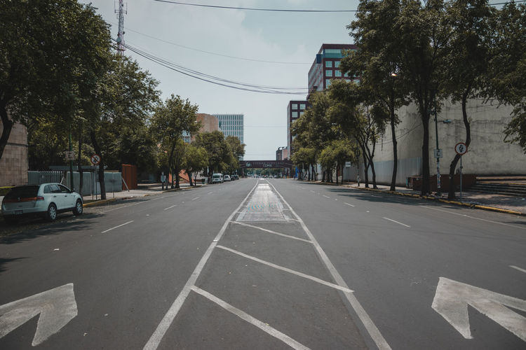 Surface level of road by trees in city