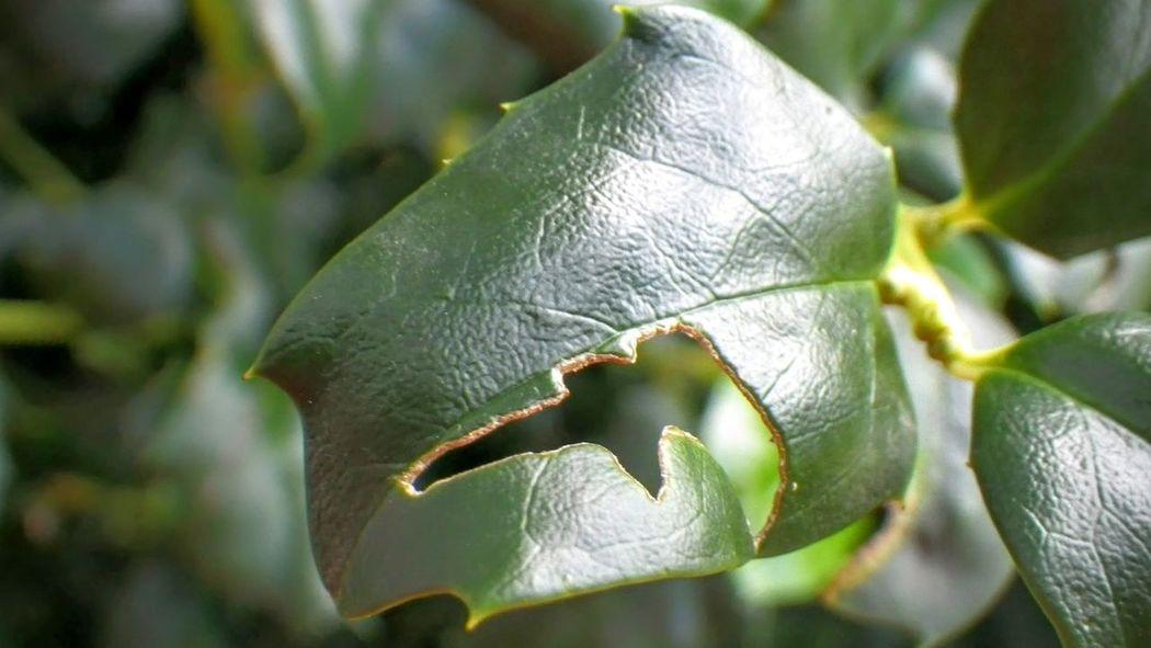 Joplin, MO fragility Focus On Foreground Leaf Close-up macro