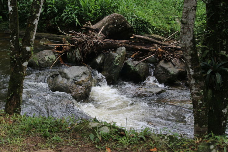 River and wood