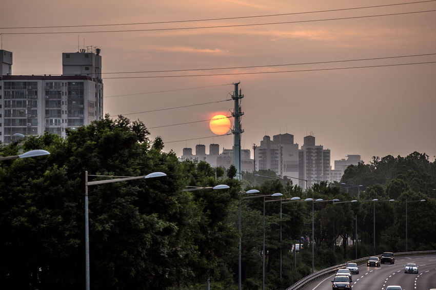 Architecture Building Built Structure Cable City City Life City Street Cloud - Sky Diminishing Perspective Growth Land Vehicle Mode Of Transport No People Outdoors Power Line  Road Road Seonyudo Sky Street Light Street Light Sunset The Way Forward Traffic Tree