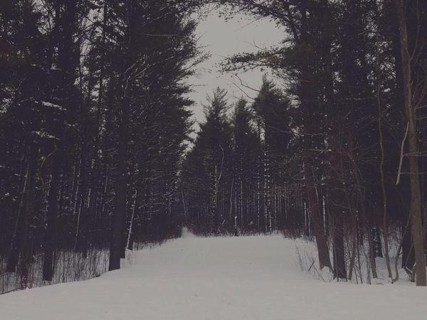 AMPt - Landscape