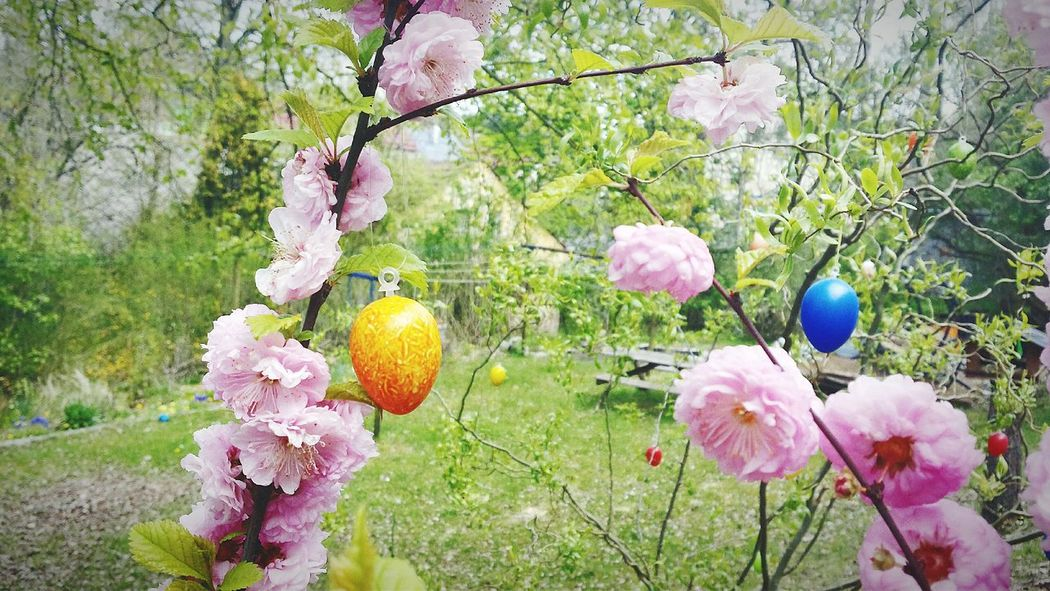 Yellow and blue Easteregg on a branch with pink flowers Tree Outdoors No People Day Nature Flower Plant Branch Beauty In Nature Close-up Freshness Eggs Art Colorful Easter Decoration Germany Hanging Easter Eggs Easteregg Pink Color Sunlight Green Color Multi Colored Sky Low Angle View Plant