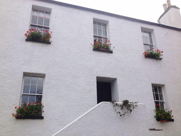 Beautiful flowers in the window ledges Contrast Colours White Architecture Taking Photos Getting Inspired Flowers
