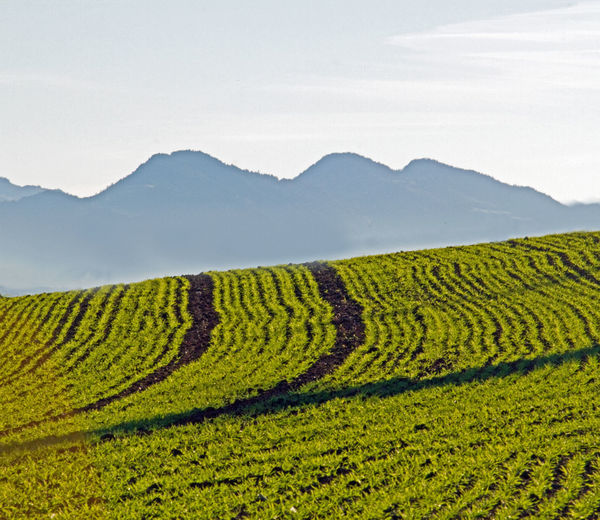 Scenic view of agricultural field against sky and swiss mountains