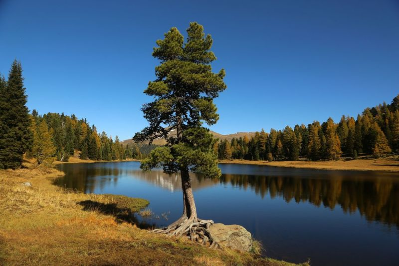 Still the lake rests Ber Bergsee Water Plant Tree Tranquility Sky Beauty In Nature Lake Reflection Scenics - Nature Tranquil Scene Clear Sky Blue Outdoors Idyllic Coniferous Tree Nature
