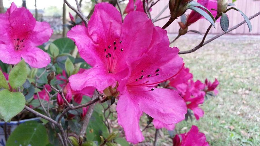 Testing this app... #android #andrography #teamandroid #androidalltheway #samsung #samsunggalaxynote2 #galaxynote2 #note2 #galaxy #Florida #kbrn #tuesday #martes #flower #flowers Flowers Android Florida Samsung Galaxy Note II Kbrn