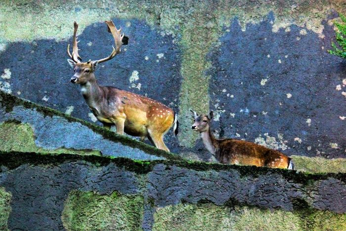 The Concrete Jungle Animal Animal Head  Animal Themes Animals In The Wild Antlers On Wall Concrete Jungle Concrete Wall Contrasting Colors Contrasts Of Beauty Day Dear_toMe Deers Downthedrain Following The Path... Herbivorous Male And Female Mammal No People Outdoors Safari Animals Wildlife Zoology Going Remote