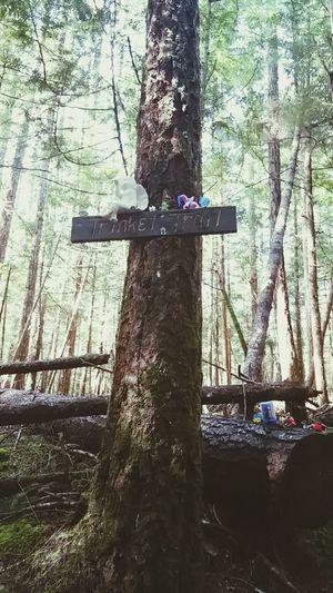 Trinket Trail