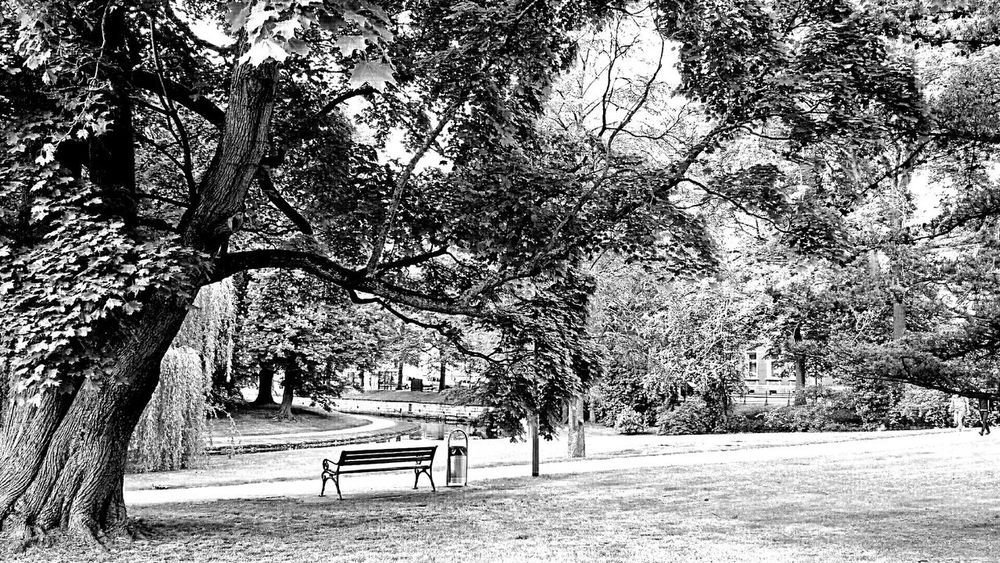 """B&w Black & White Bench Under Tree B&W Collection Celle Celler Schlosspark Eyeem&ghetty A Walk In The Park Parkbank Park Bench. One of my captures which made it to """"Ghetty Market"""" 😊 My Best Photo 2015"""