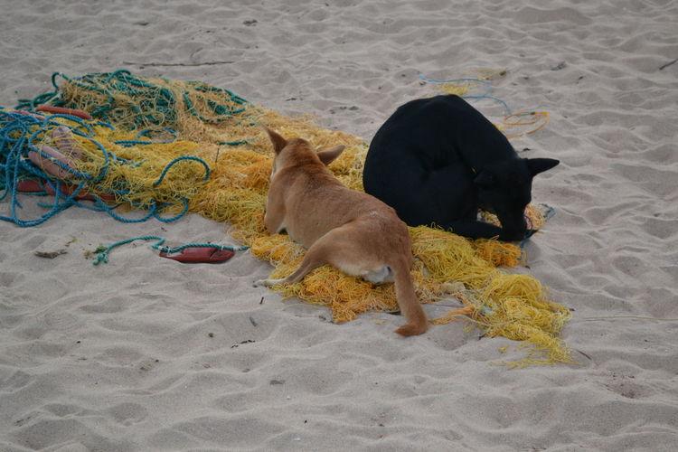 Beach Beachlife Beachlovers Dogs Dogslife Fishernet Outside Wild Flowers