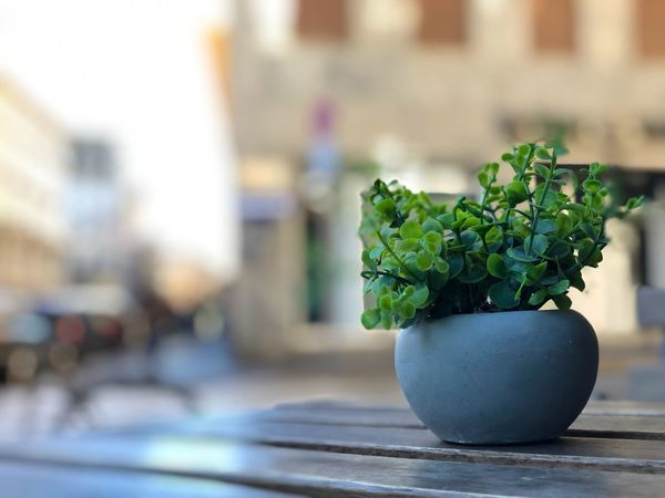 Art Beauty Reflection Buildings Green Pot Flower Table Wooden EyeEm Selects Focus On Foreground Potted Plant Plant No People Green Color Table Indoors  Nature Close-up Still Life Herb Houseplant Flower Pot Decoration Growth Day Freshness Food And Drink Leaf