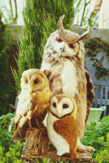 Hoot. Owls Barnowls Eagleowl Hoothoot