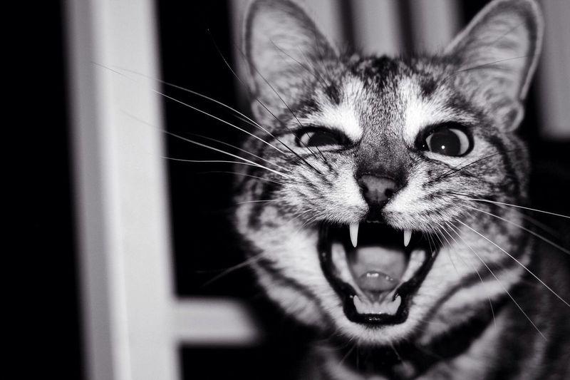 😸 Cat Wildcat Moment кот момент Morning утро сумасшедшееутро