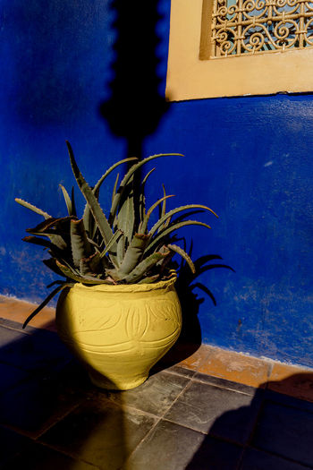 Morocco Marrakesh Marrakech Majorelle Garden Majorelle Potted Plant No People Plant Nature Growth Flooring Architecture Wall - Building Feature Built Structure Shadow Blue Tile Sunlight Wall Houseplant Contrast Colourful Travel Destinations Tourist Attraction