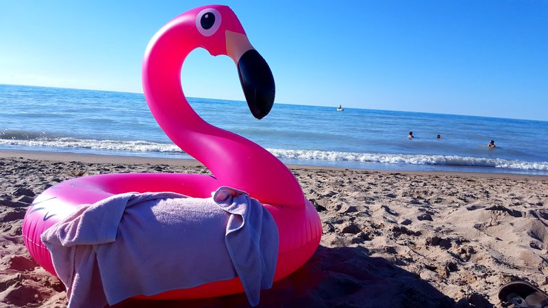 flamingo Beach Beauty In Nature Close-up Colors Flamingo Grand Bend, Ontario Horizon Over Water Lake Huron Lake Huron, Canada Lifebuoy Millennial Pink Nature No People Outdoors Pink Pink Color Sand Sea Sky Summer Sunlight Swimming Tube Vacations Water