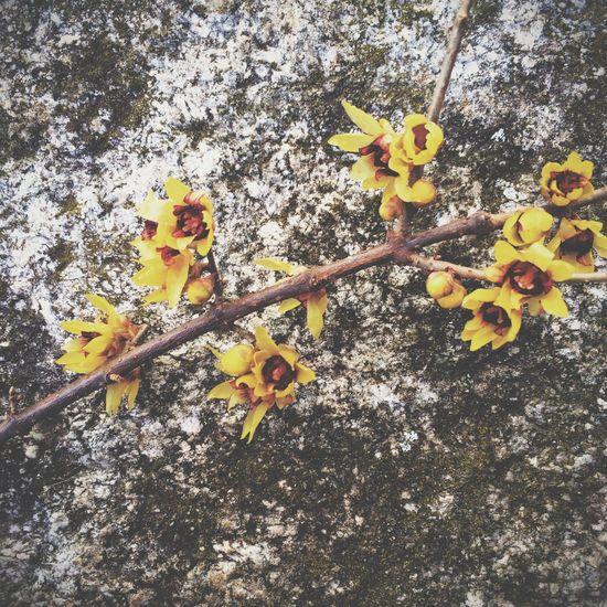 Details Plants Flower Stone