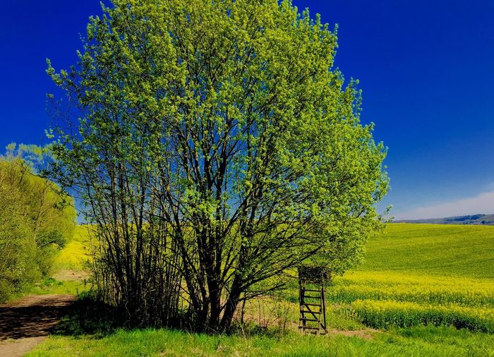 Frühlingstag 🌼💫✨ Plant Growth Green Color Sky Beauty In Nature Field Nature Landscape Environment Outdoors Tree Blue Tranquility No People Land Day Tranquil Scene Scenics - Nature Sunlight Agriculture