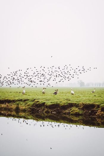 Birds of a feather Travel Photography Beautiful Nature Netherlands Utrecht Morning The Great Outdoors - 2018 EyeEm Awards The Traveler - 2018 EyeEm Awards Animal Wildlife Animal Themes Animals In The Wild Bird Water Flock Of Birds Flying Beauty In Nature Environment Outdoors Nature Animal Sky