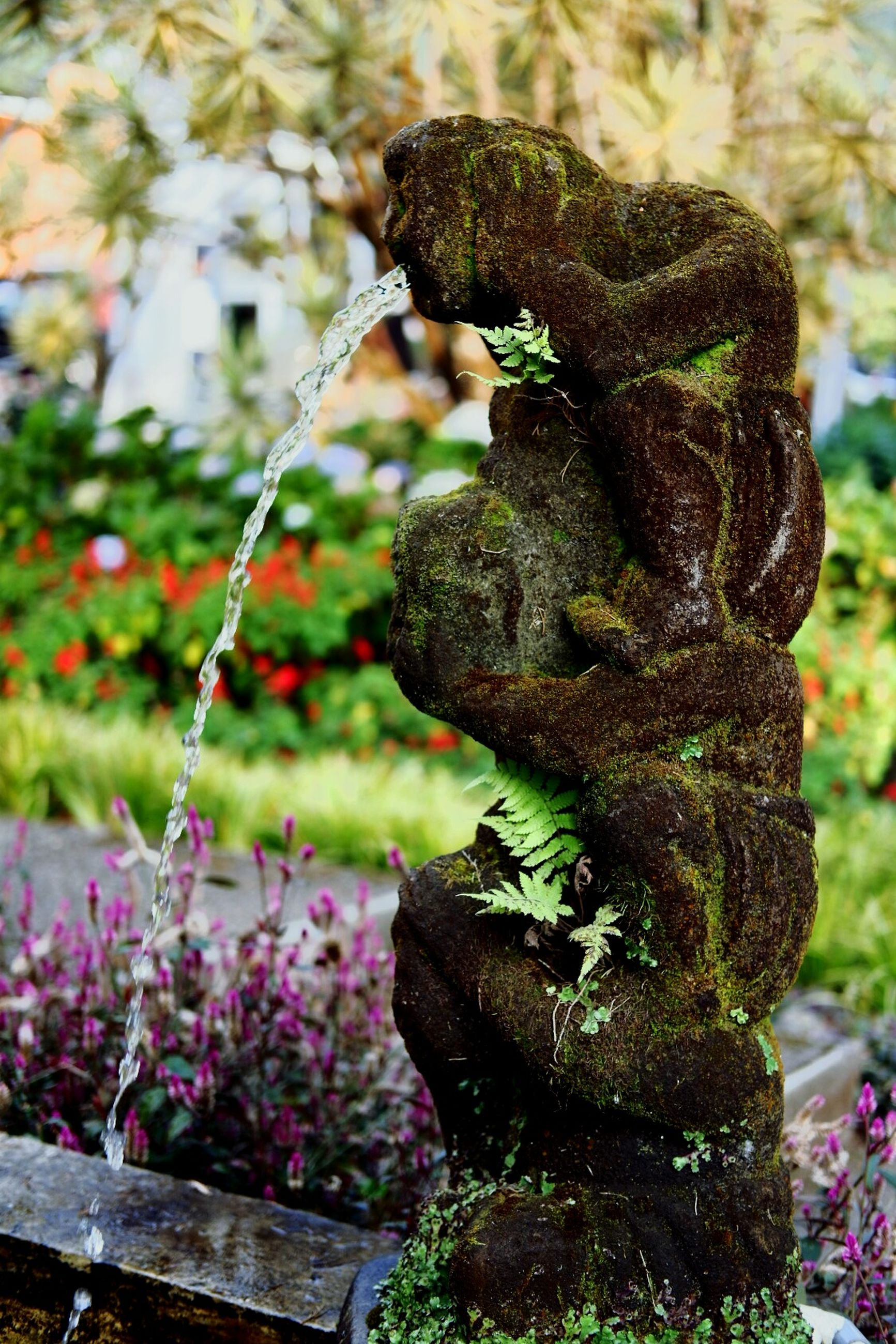 plant, focus on foreground, sculpture, representation, art and craft, no people, flowering plant, flower, day, nature, statue, close-up, human representation, garden, creativity, growth, formal garden, outdoors, craft, park