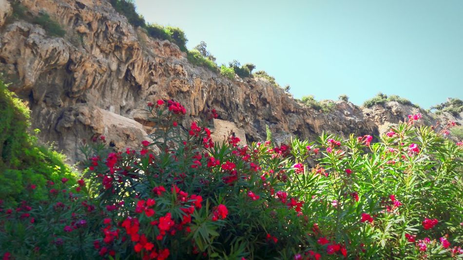 Flowers Rocks Nature Human FlowerFine Art Photography France Dreamscape Colorexplosion Sky Blue Sky Travel Photography 43 Golden Moments