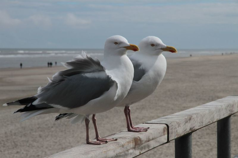 Close-up of seagull perching on beach against sky