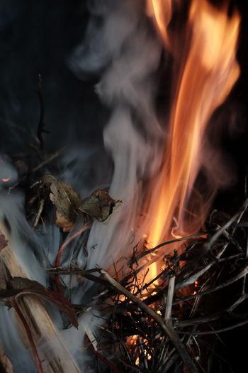 Close-up of bonfire against plants