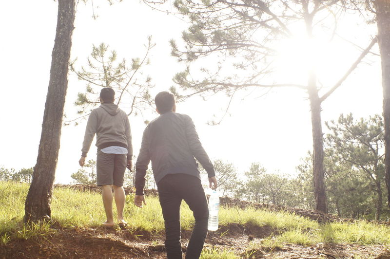Beauty In Nature Bonding Branch Casual Clothing Couple - Relationship Day Friendship Full Length Grass Holding Hands Leisure Activity Lifestyles Love Men Nature Outdoors Real People Rear View Sky Sunlight Togetherness Tree Tree Trunk Two People Walking