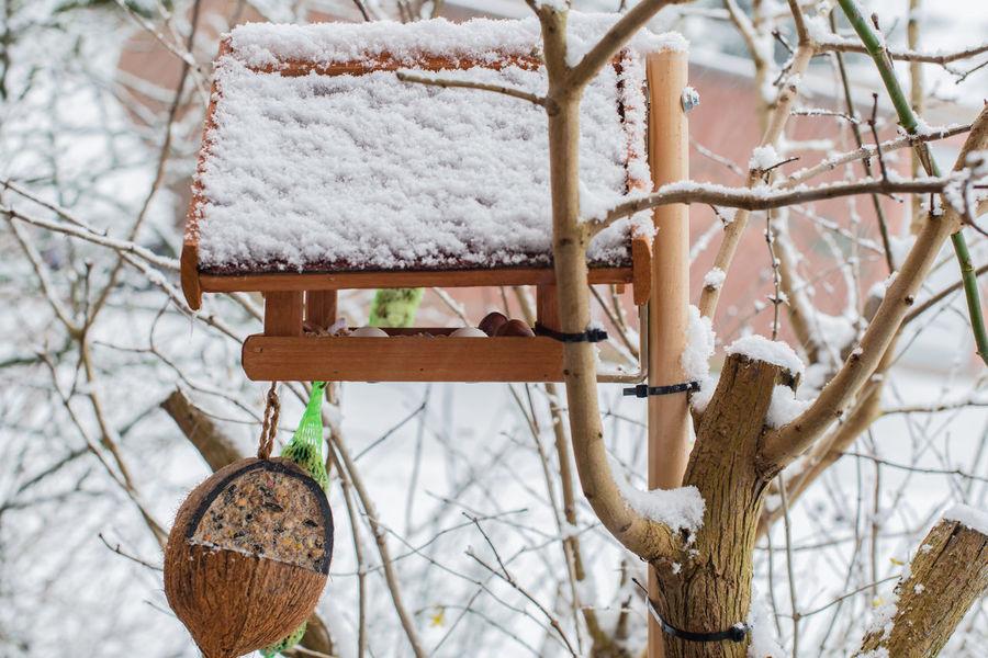 Birdhouse in the winter filled with fodder Autumn Beak Feathers Feeding  Great Tit, Nature Parus Caeruleus Songbird  Winter Animal Bird Bird Seed Birdhouse Birds Birdseed Dumpling  Eat Fat Ball Food Lard Sunflower Seeds Wildlife