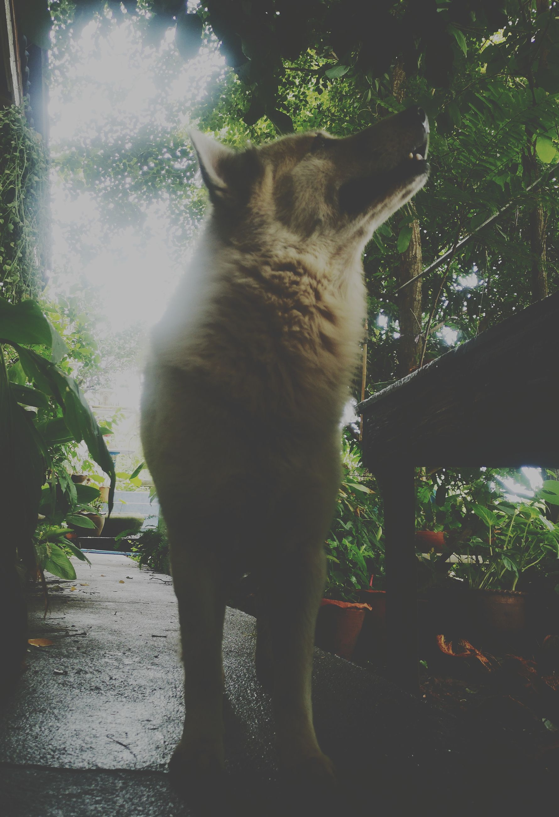 mammal, animal themes, domestic, animal, domestic animals, pets, one animal, cat, domestic cat, plant, vertebrate, feline, no people, nature, standing, looking, day, tree, front or back yard, outdoors, whisker
