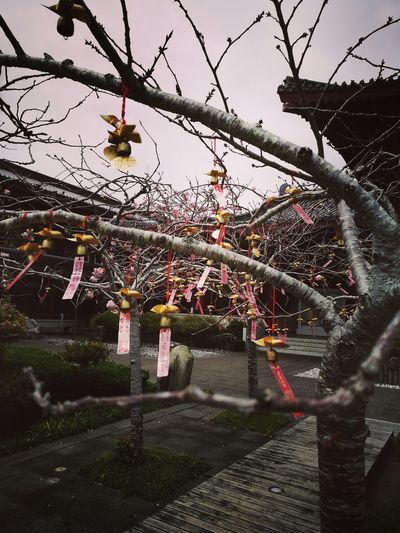 Hanging Tree Outdoors Day No People Nature Sky Beauty In Nature Flower Water Hall New Zealand Museum Budism Budist Tempel Foguangshan Pray Wish Inner Peace