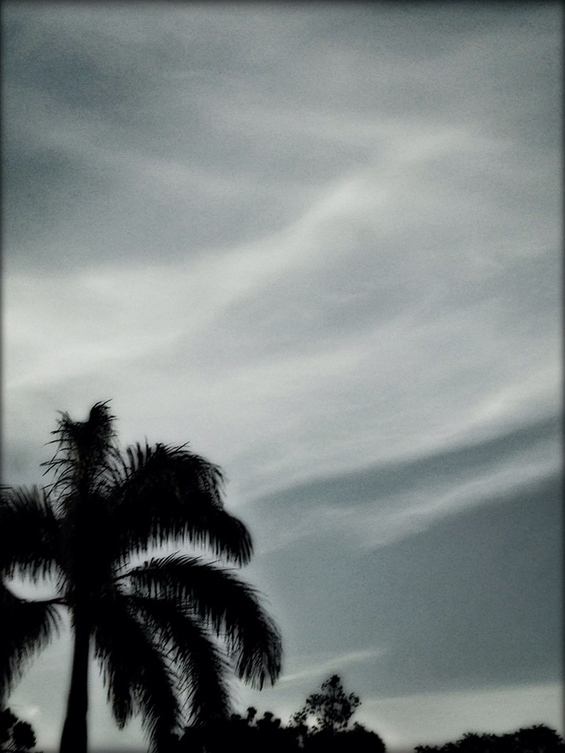 low angle view, sky, palm tree, tree, cloud - sky, silhouette, tranquility, cloudy, beauty in nature, nature, growth, scenics, cloud, tranquil scene, high section, outdoors, dusk, no people, weather, auto post production filter