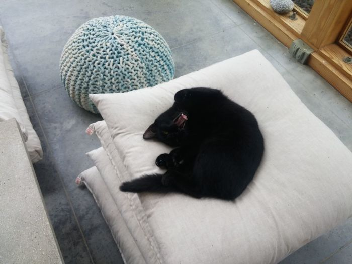 Cat Yawn Animal Dog Pets High Angle View Mammal One Animal Black Color Domestic Animals No People Animal Themes Day Cat On Pillow Close-up EyeEmNewHere Funny Kitty High End Cat